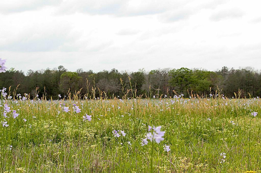 Active   27 Canyon Run Boulevard Huntsville, Texas 77320 5