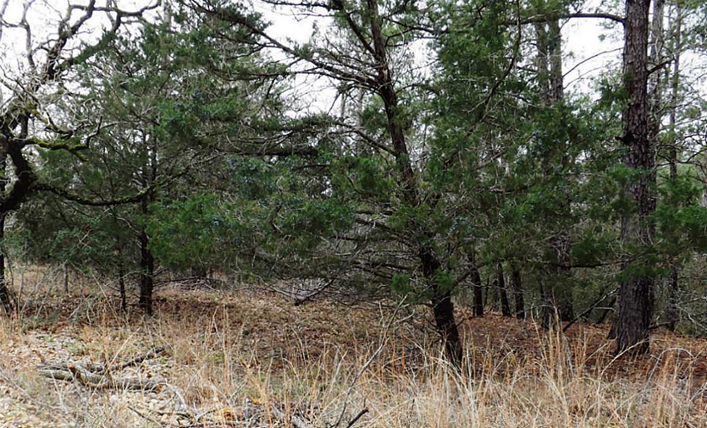 Sold Property   00 Stephen Lane Lots 193 & 194  La Grange, Texas 78945 1