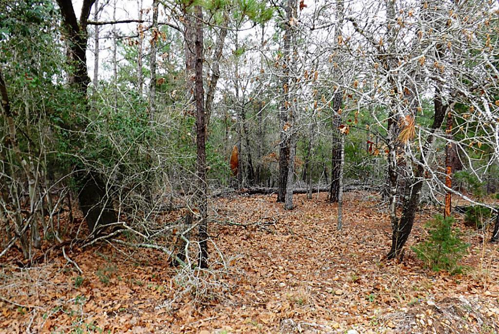 Sold Property   00 Stephen Lane Lots 193 & 194  La Grange, Texas 78945 3