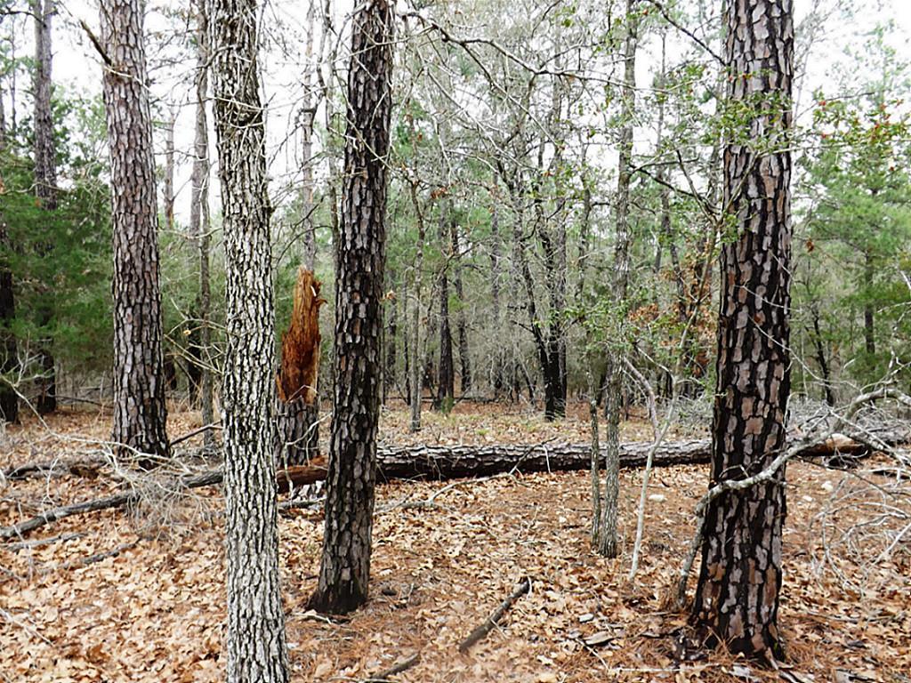 Sold Property   00 Stephen Lane Lots 193 & 194  La Grange, Texas 78945 6