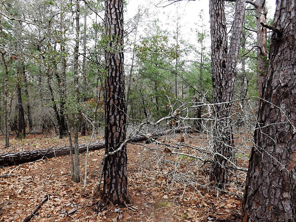 Sold Property   00 Stephen Lane Lots 193 & 194  La Grange, Texas 78945 7