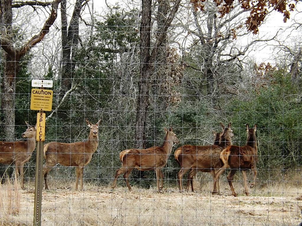 Fantastic High Fence Hunting Property in Waelder | 0 Hwy 90 Waelder, Texas 78959 19