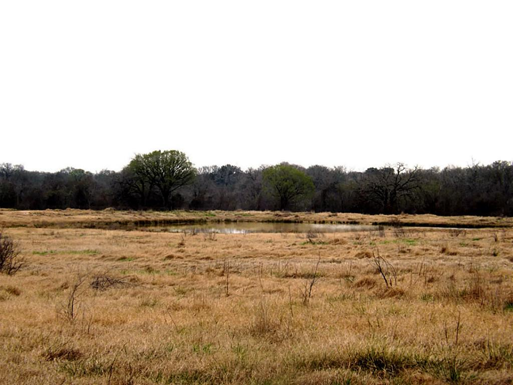 Fantastic High Fence Hunting Property in Waelder | 0 Hwy 90 Waelder, Texas 78959 8