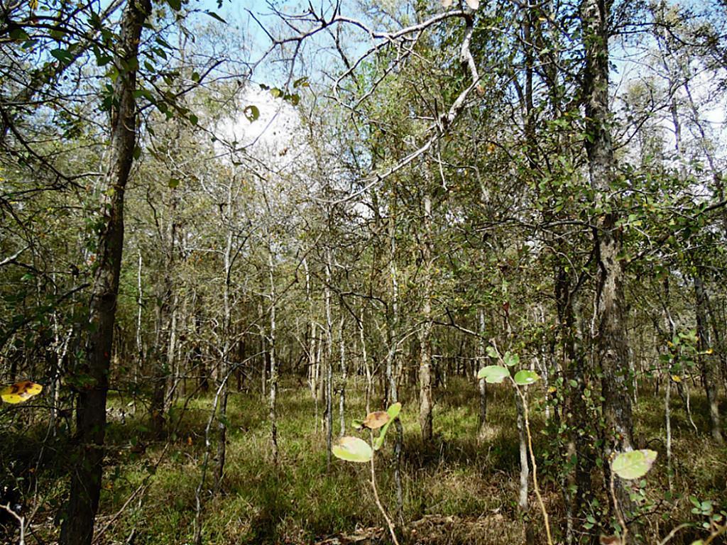 Sold Property   0 Hannay  Brookshire, Texas 77423 9