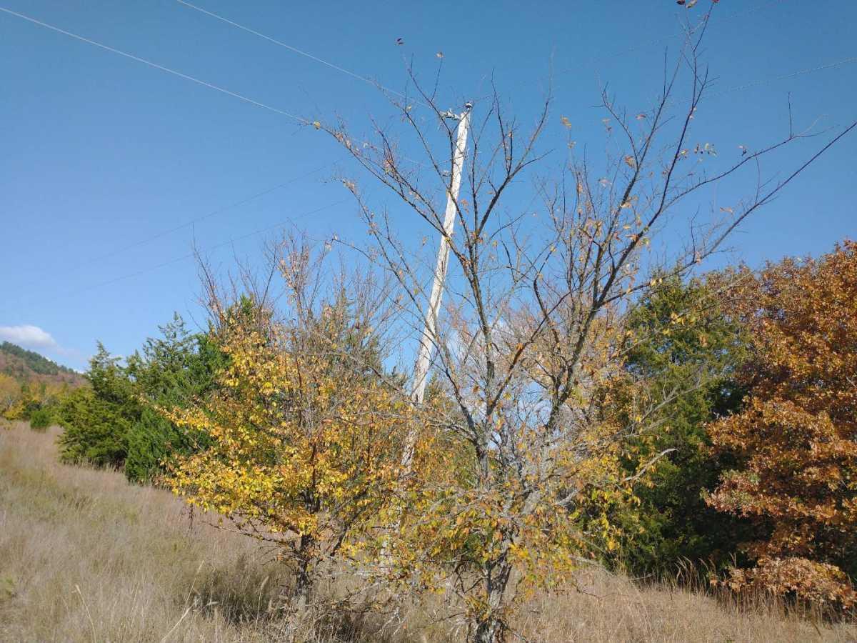 | Cemetary Rd Buffalo Valley, OK  34