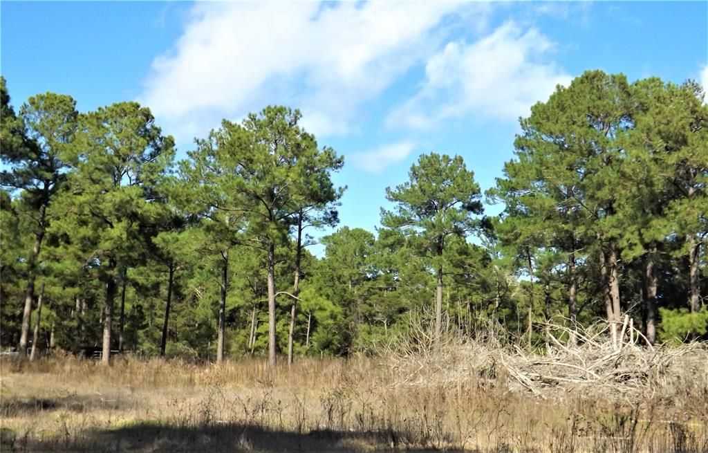 Country life setting on 10 beautiful acres in New Ulm | 1096-1098 Pine Crest  Drive New Ulm, TX 78950 13