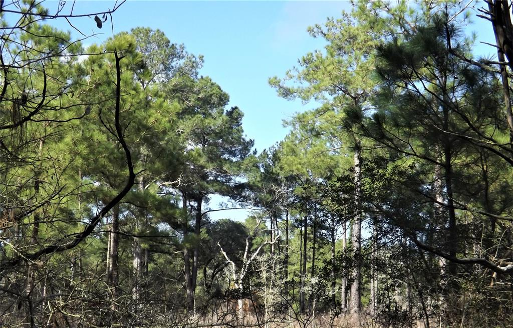 Country life setting on 10 beautiful acres in New Ulm | 1096-1098 Pine Crest  Drive New Ulm, TX 78950 14