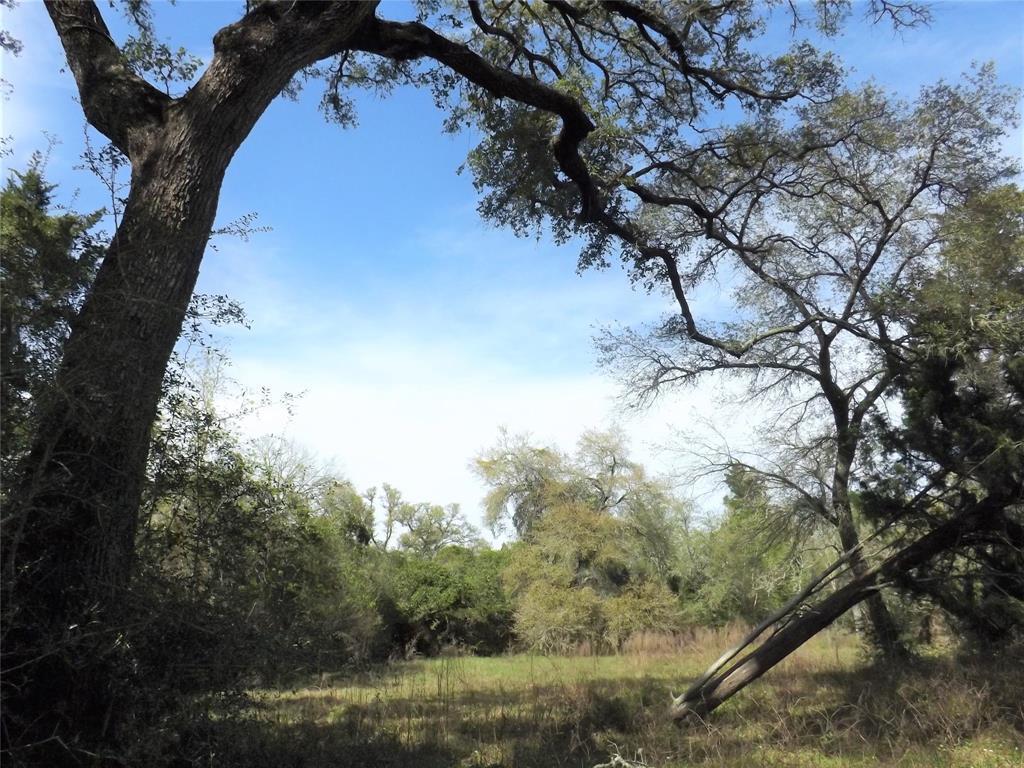 Fantastic Property in Alleyton!  Wildlife, Trees and You! | 1297 Frelsburg  Road Alleyton, TX 78935 4