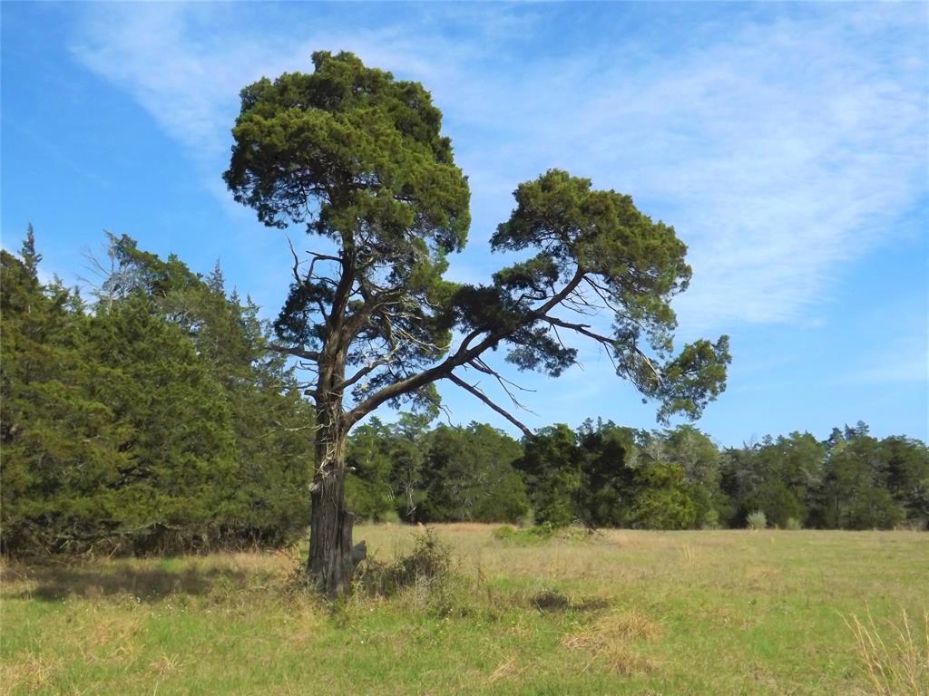 Fantastic Property in Alleyton!  Wildlife, Trees and You! | 1297 Frelsburg  Road Alleyton, TX 78935 17