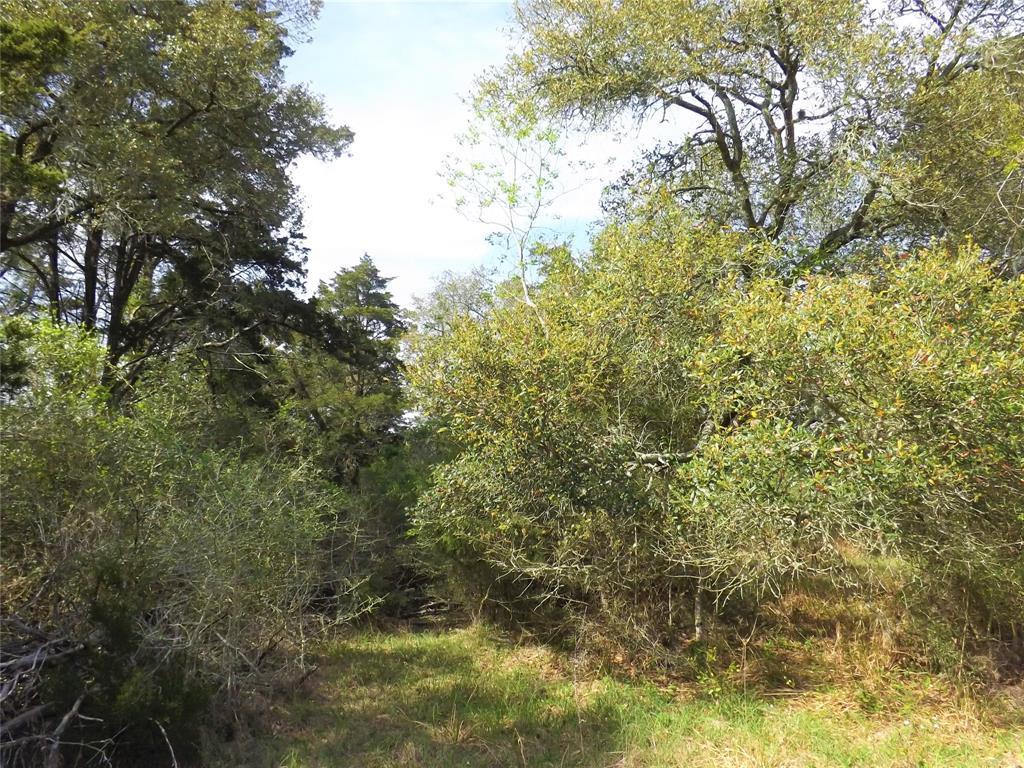 Fantastic Property in Alleyton!  Wildlife, Trees and You! | 1297 Frelsburg  Road Alleyton, TX 78935 18