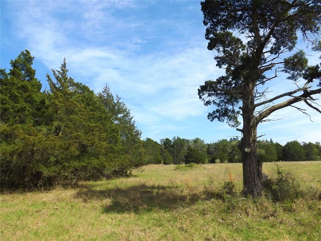 Fantastic Property in Alleyton!  Wildlife, Trees and You! | 1297 Frelsburg  Road Alleyton, TX 78935 19