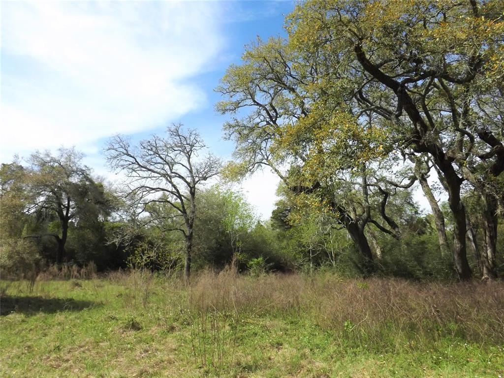 Fantastic Property in Alleyton!  Wildlife, Trees and You! | 1297 Frelsburg  Road Alleyton, TX 78935 6