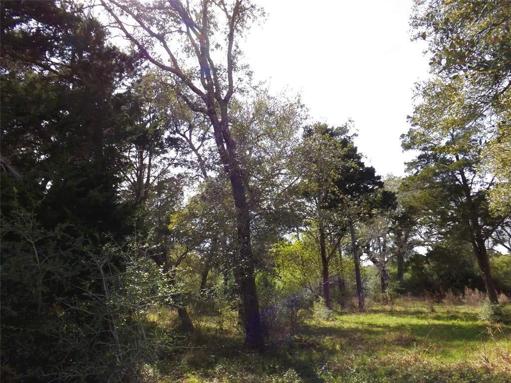 Fantastic Property in Alleyton!  Wildlife, Trees and You! | 1297 Frelsburg  Road Alleyton, TX 78935 11