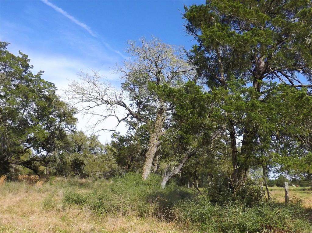 Fantastic Property in Alleyton!  Wildlife, Trees and You! | 1297 Frelsburg  Road Alleyton, TX 78935 13