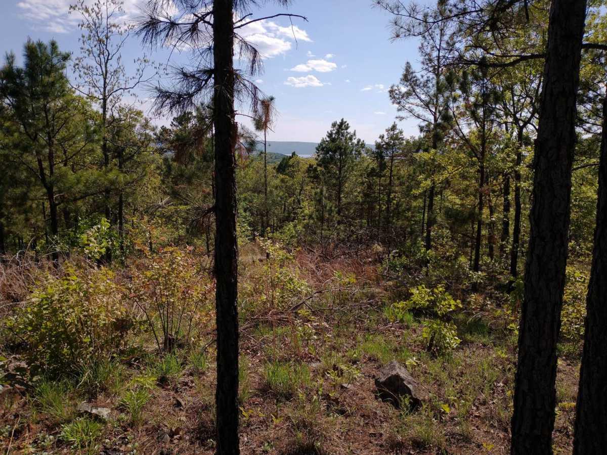 Active | Lakeview Mountain Lots Tuskahoma, OK 74574 30