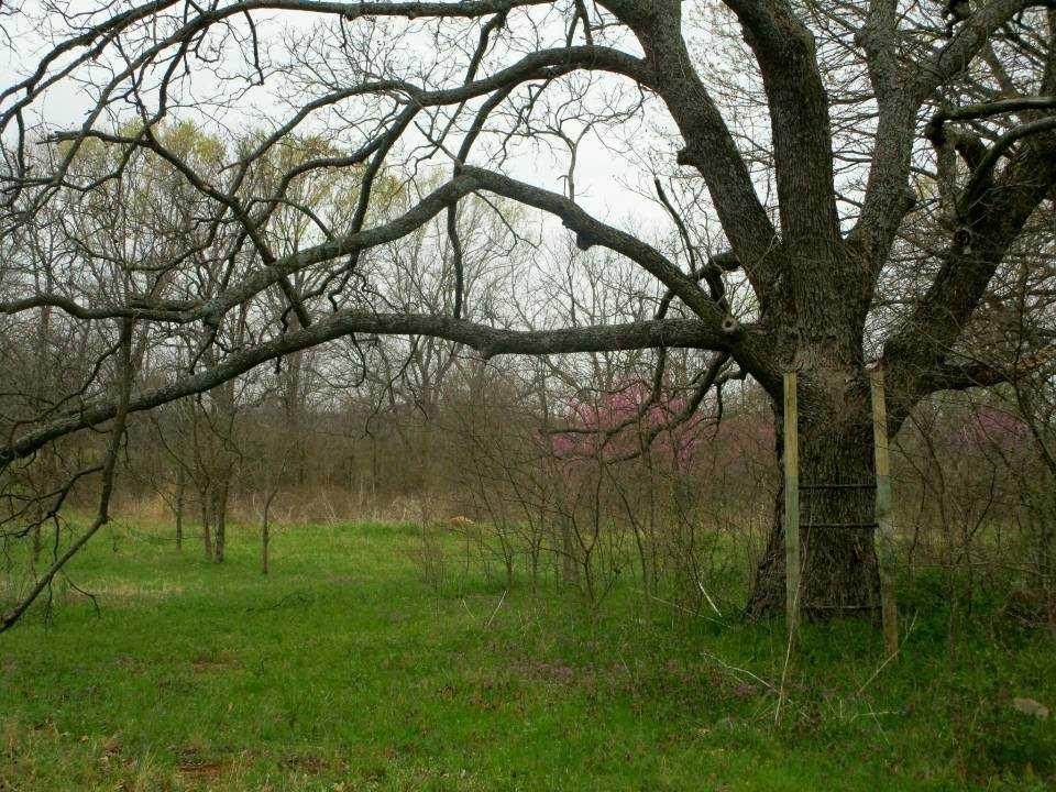 Land for sale in Milland, ranch, recreational, hunting, oklahoma, cabinl Creek Oklahoma | 9350 OK Hwy 7 West - WILDLIFE WAY Mill Creek, OK 74856 11