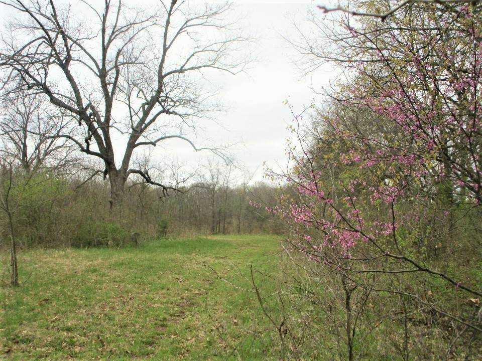 Land for sale in Milland, ranch, recreational, hunting, oklahoma, cabinl Creek Oklahoma | 9350 OK Hwy 7 West - WILDLIFE WAY Mill Creek, OK 74856 19