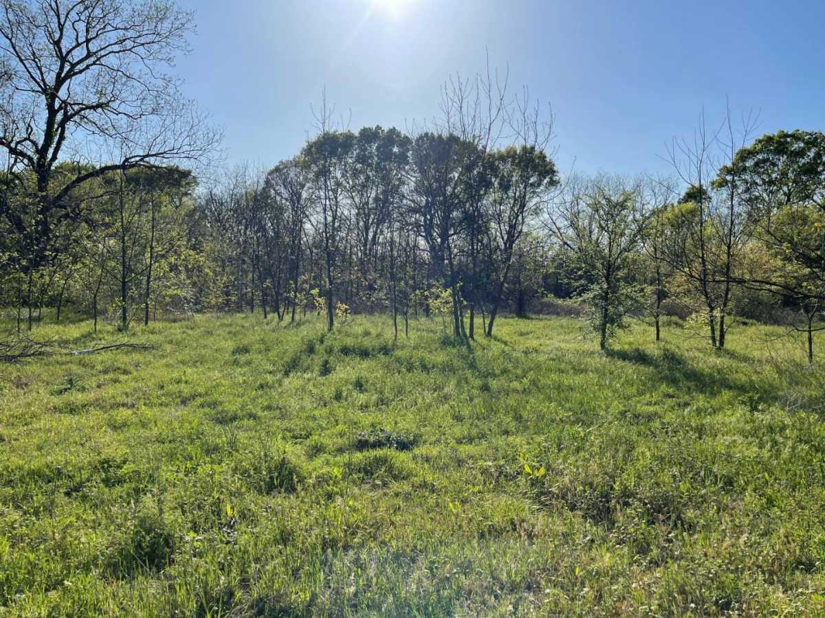 Land for sale in Milland, ranch, recreational, hunting, oklahoma, cabinl Creek Oklahoma | 9350 OK Hwy 7 West - WILDLIFE WAY Mill Creek, OK 74856 20