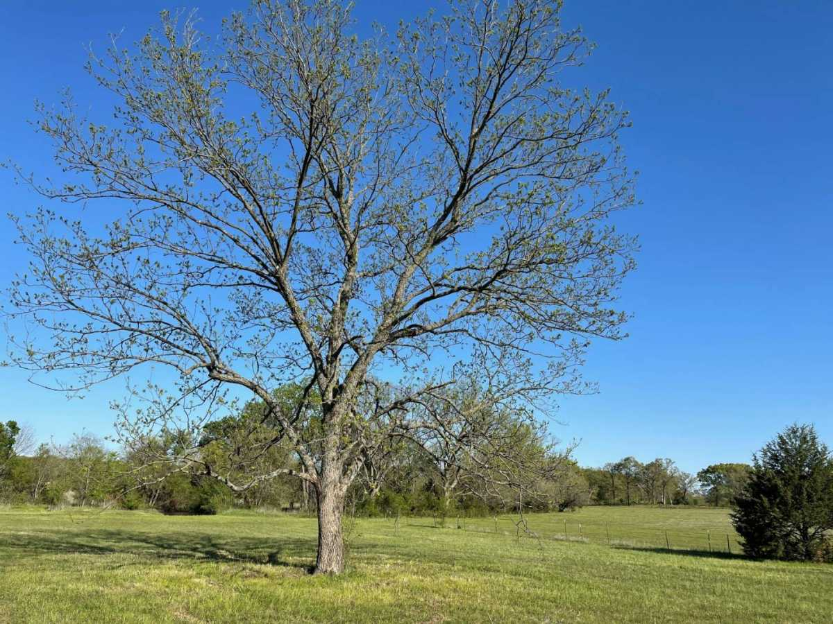 land, ranch, recreational, hunting, oklahoma, cabin | 9120 OK Hwy 7 West - SOUTHERN ESCAPE RANCH Mill Creek, OK 74856 22