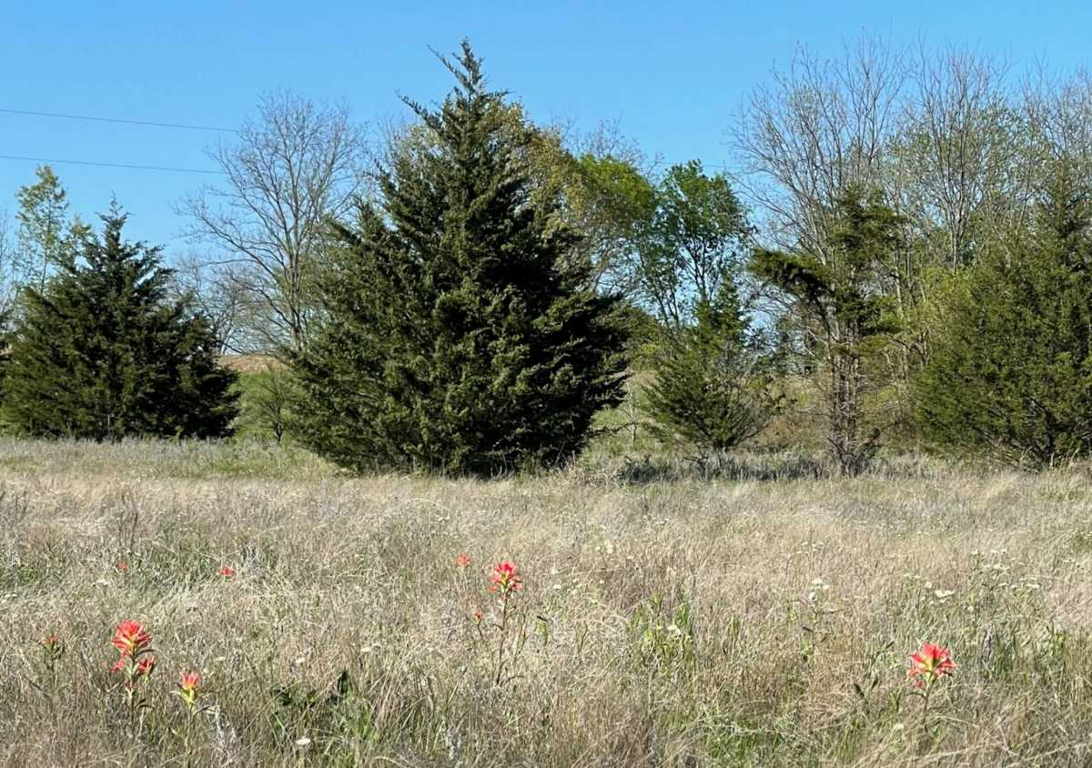 land, ranch, recreational, hunting, oklahoma, cabin | 9120 OK Hwy 7 West - SOUTHERN ESCAPE RANCH Mill Creek, OK 74856 34