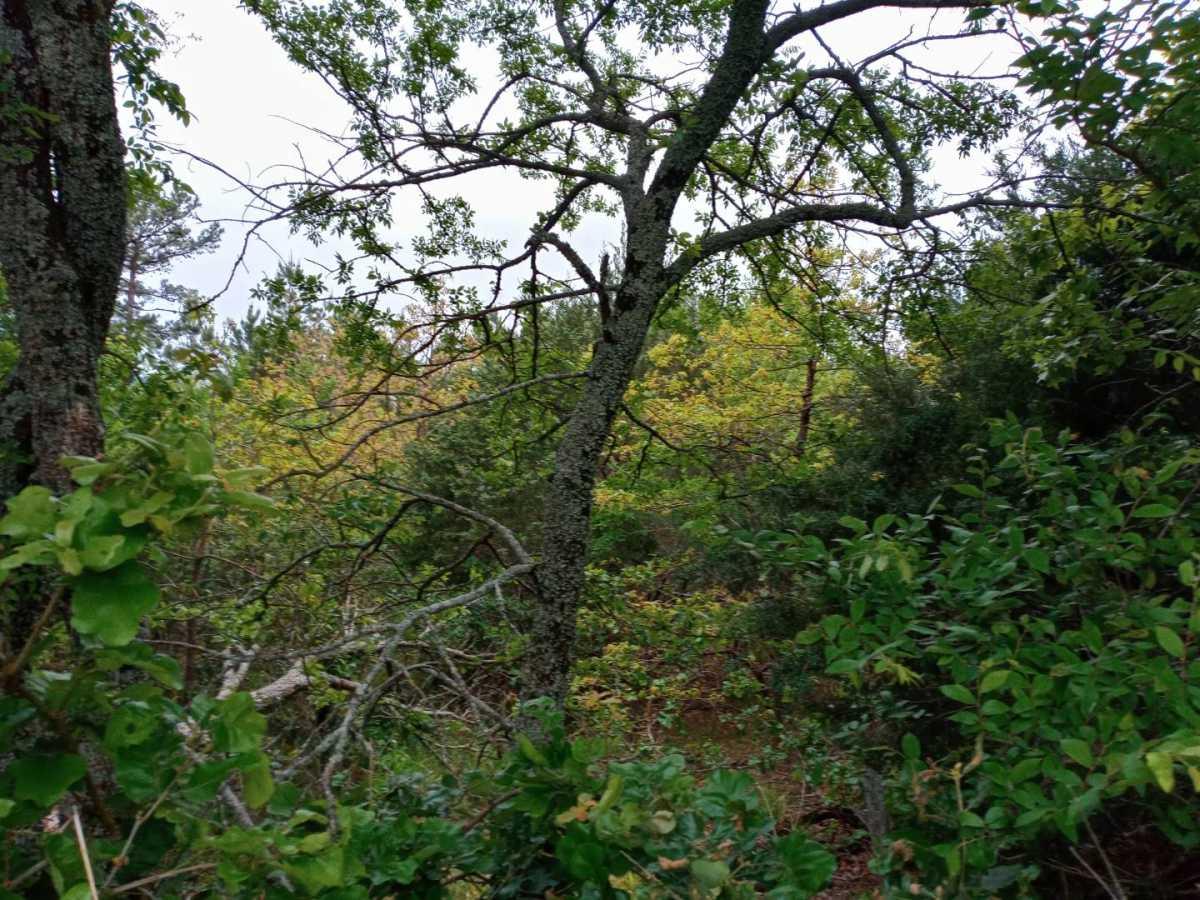 land, ranch, recreational, hunting, oklahoma, cabin   3998 Indian Hwy Talihina, OK 74571 9