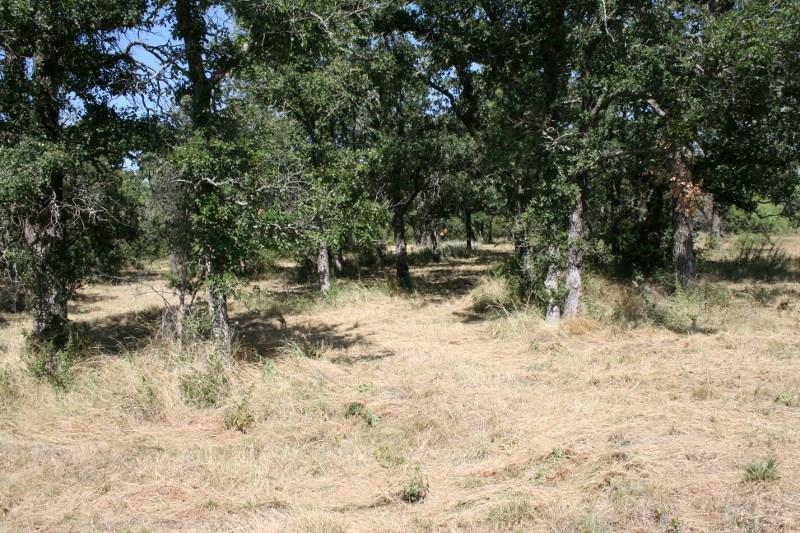 Sold Property | 00 Prickly Pear  Gordon, TX 76453 10