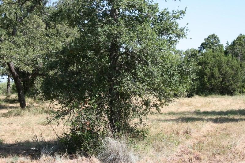 Active | 00 Prickly Pear  Gordon, Texas 76453 1