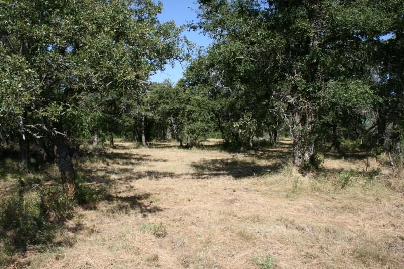 Sold Property | 00 Prickly Pear  Gordon, TX 76453 4