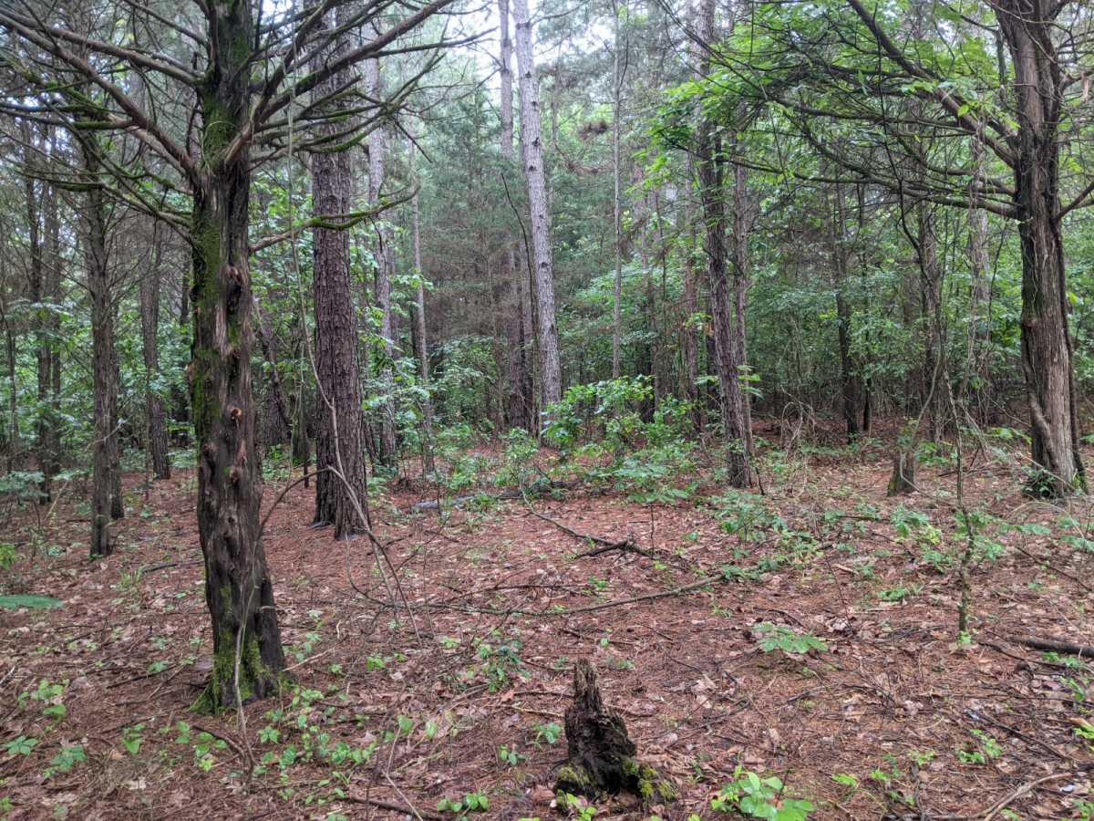 land, ranch, recreational, hunting, oklahoma, cabin   N 4140 Rd Antlers, OK 74523 3