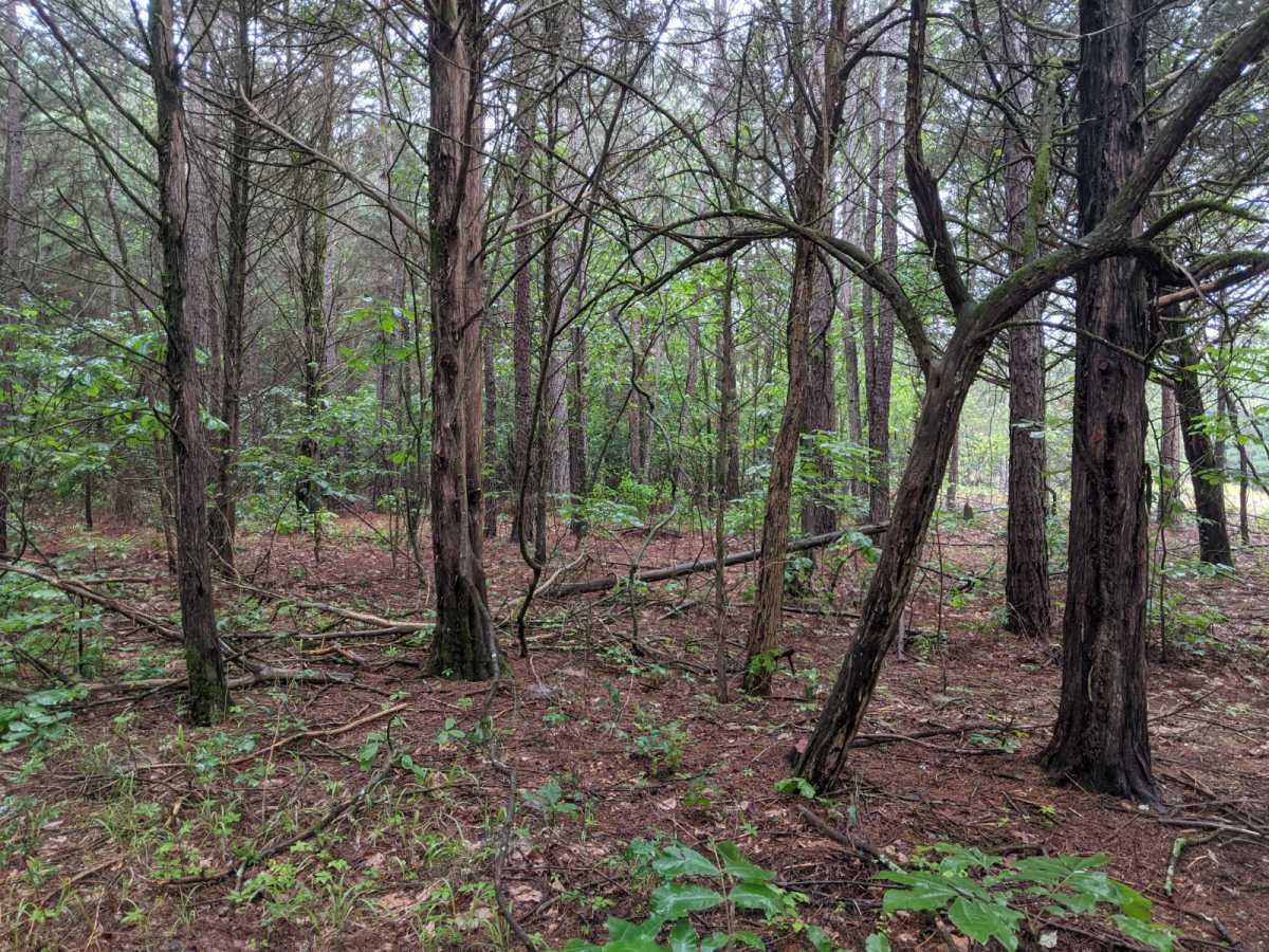 land, ranch, recreational, hunting, oklahoma, cabin   N 4140 Rd Antlers, OK 74523 5