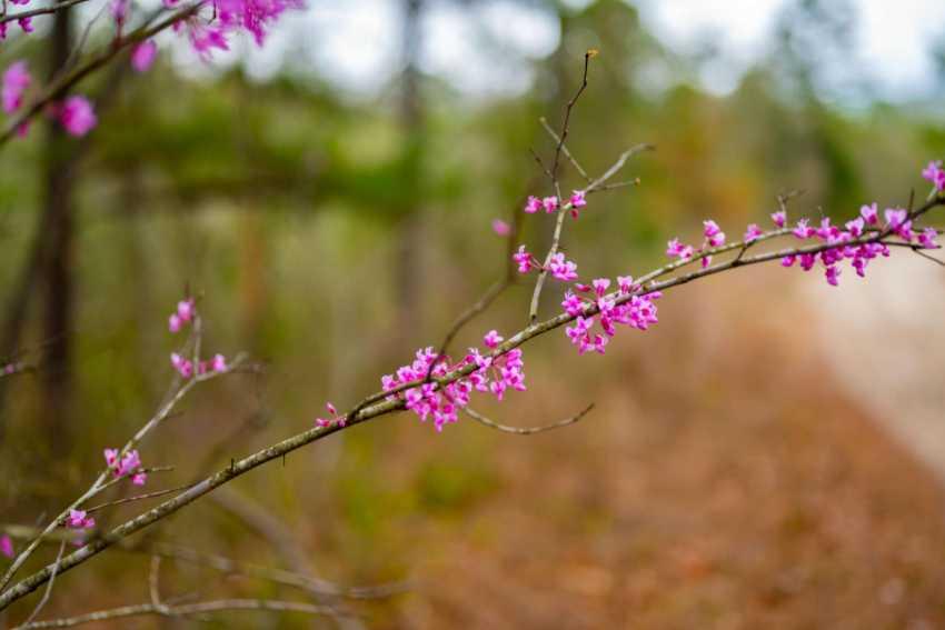 land, ranch, recreational, hunting, oklahoma, cabin | Rock Creek Ranch II - 42.45 Acres  Bengal, OK 74563 5