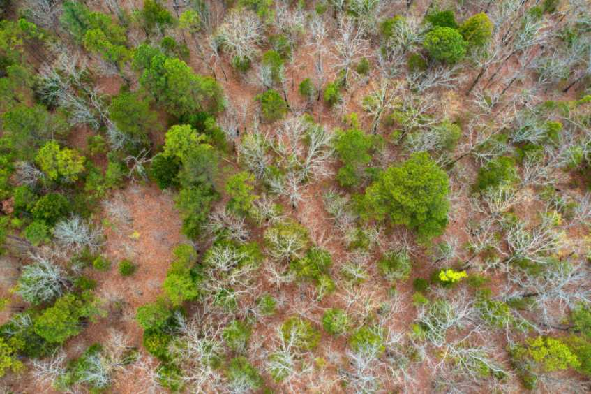 land, ranch, recreational, hunting, oklahoma, cabin | Rock Creek Ranch II - 42.45 Acres  Bengal, OK 74563 8