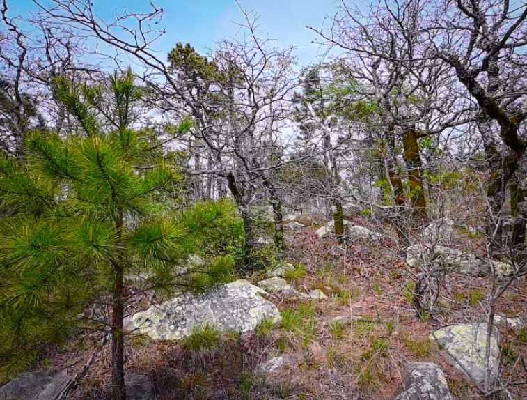 Land, hunting, cabins,  recreational land, hunting land | K-TRAIL VISTA - 22.46 AC ALBION, OK 74521 16