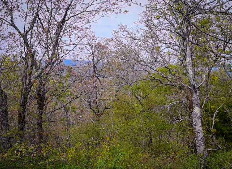 Land, hunting, cabins,  recreational land, hunting land | K-TRAIL VISTA - 22.46 AC ALBION, OK 74521 17