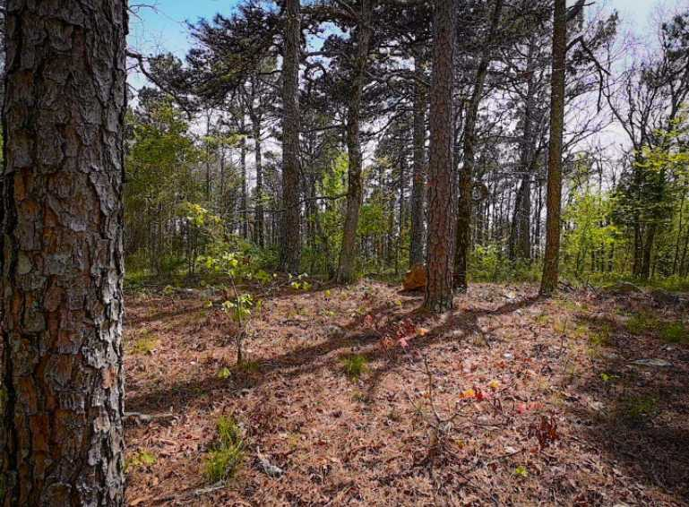 Land, hunting, cabins,  recreational land, hunting land | K-TRAIL VISTA - 22.46 AC ALBION, OK 74521 18