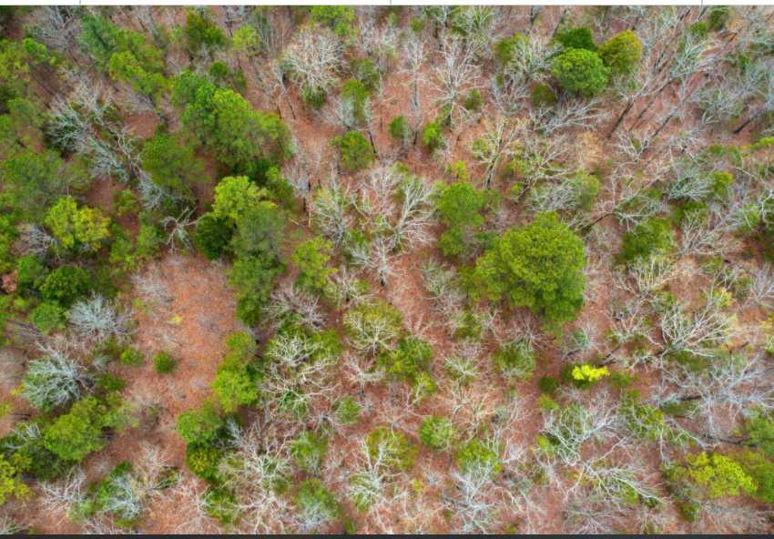 Active | Rock Creek Ranch II - 60 Acres Bengal, OK 74563 1