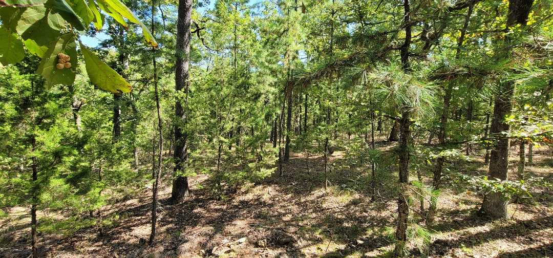 Active   20 ACRES OFF GRID HUNTING PARADISE Bengal, OK 74563 10