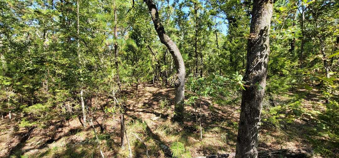 Active   20 ACRES OFF GRID HUNTING PARADISE Bengal, OK 74563 11