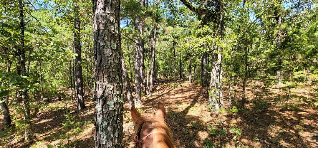 Active   20 ACRES OFF GRID HUNTING PARADISE Bengal, OK 74563 0