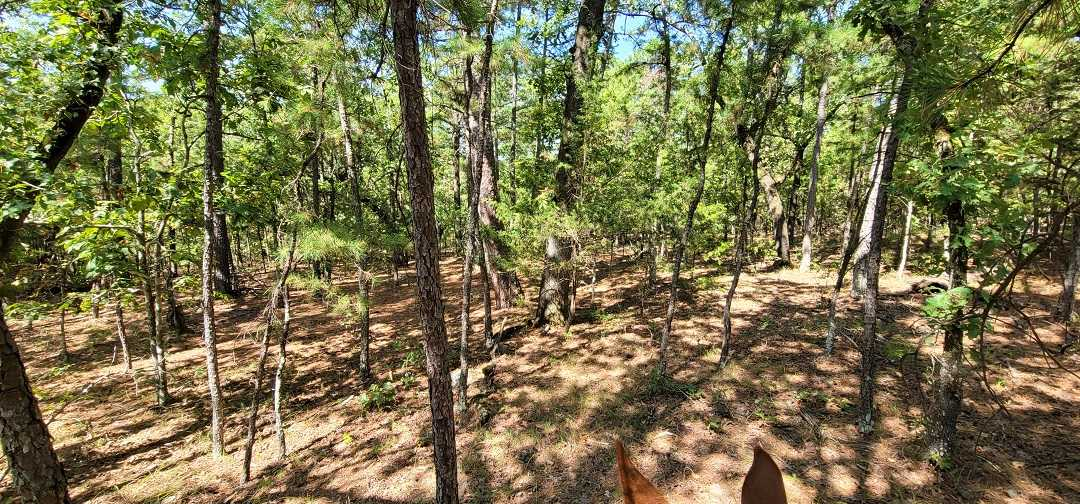 Active   20 ACRES OFF GRID HUNTING PARADISE Bengal, OK 74563 13
