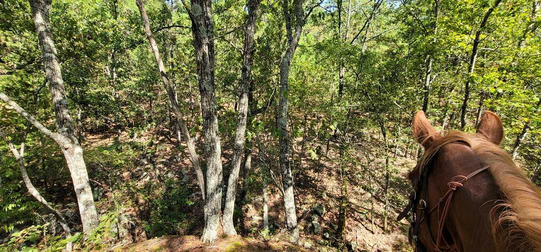 Active   20 ACRES OFF GRID HUNTING PARADISE Bengal, OK 74563 15