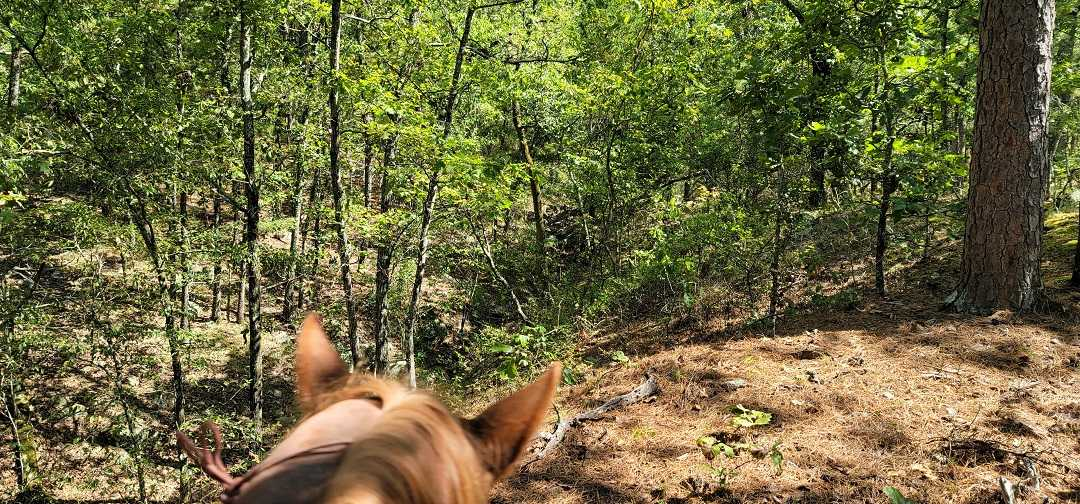 Active   20 ACRES OFF GRID HUNTING PARADISE Bengal, OK 74563 16