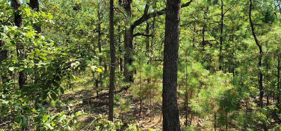 Active   20 ACRES OFF GRID HUNTING PARADISE Bengal, OK 74563 17