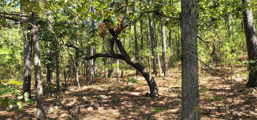 Active   20 ACRES OFF GRID HUNTING PARADISE Bengal, OK 74563 18