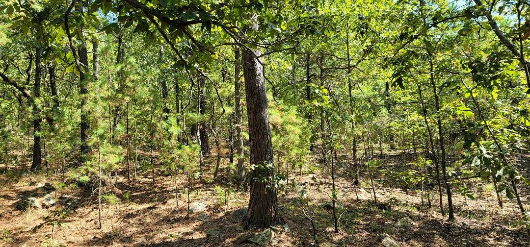Active   20 ACRES OFF GRID HUNTING PARADISE Bengal, OK 74563 19