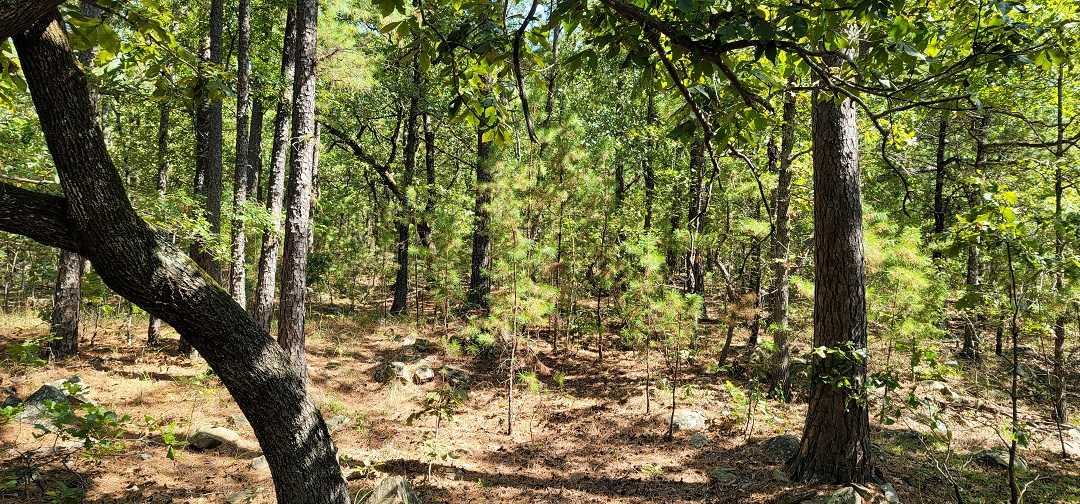 Active   20 ACRES OFF GRID HUNTING PARADISE Bengal, OK 74563 20