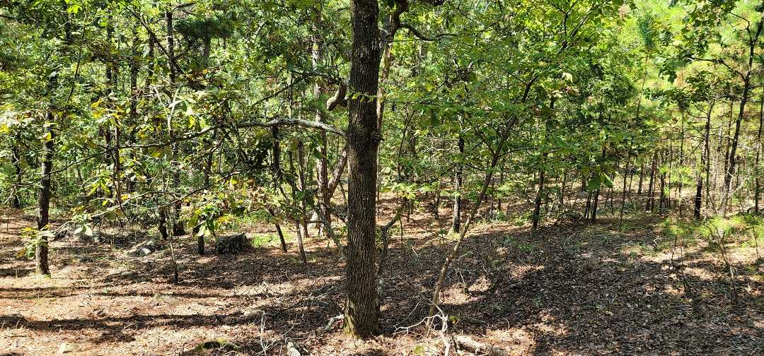 Active   20 ACRES OFF GRID HUNTING PARADISE Bengal, OK 74563 22
