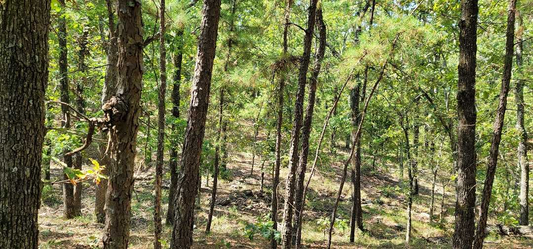 Active   20 ACRES OFF GRID HUNTING PARADISE Bengal, OK 74563 23