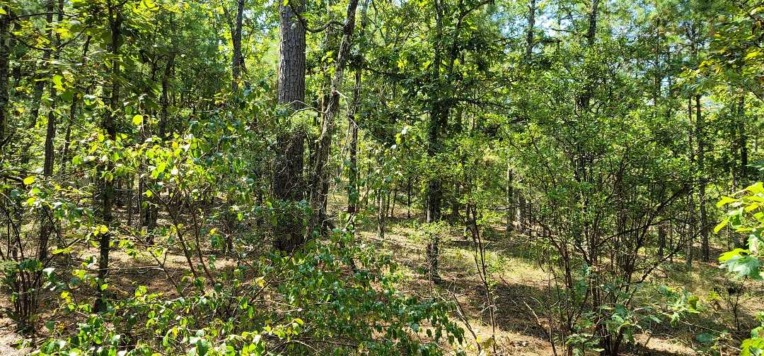 Active   20 ACRES OFF GRID HUNTING PARADISE Bengal, OK 74563 24