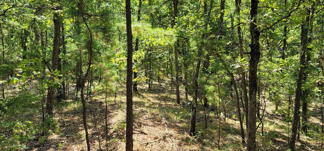 Active   20 ACRES OFF GRID HUNTING PARADISE Bengal, OK 74563 4